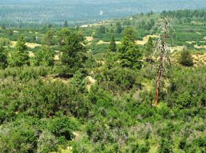 Durango Real Estate Elk Stream Ranch land for sale near Durango CO