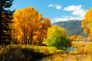 Animas Valley fall colors north of Durango