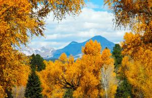 Animas Valley fall colors