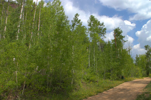 Durango CO vacant land for sale in Aspen Winds