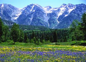 Rocky Mountain Spring near Durango CO