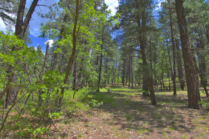 Durango vacant land for sale-Falls Creek Ranch