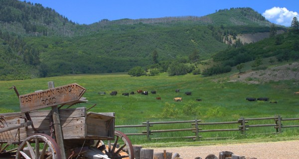 TBD Destination Ranch Road East wagon with cows in pasture