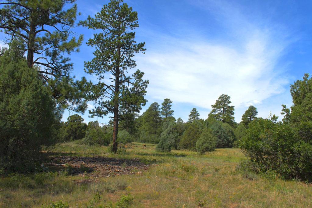 Land for sale Durango CO level building area upper portion