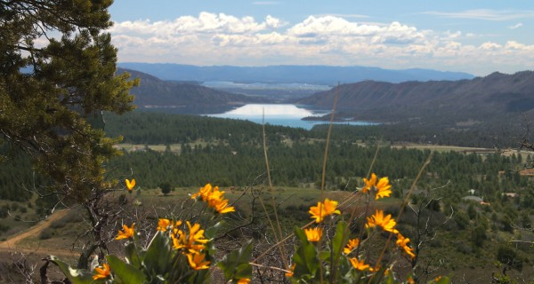 Shenandoah land lake_nighthorse_with_wildflowers