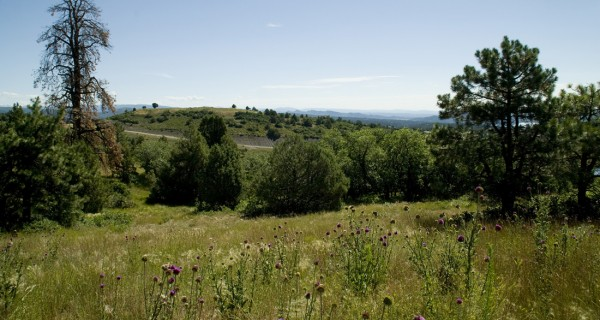 Shenandoah land lot-2