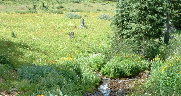 Los Mountain stream on property